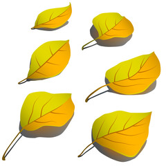 Set of yellow autumn leaves lying on whit surface