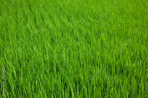 farm[paddy_field]_01