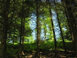 Waldlichtung am Hang im Gegenlicht