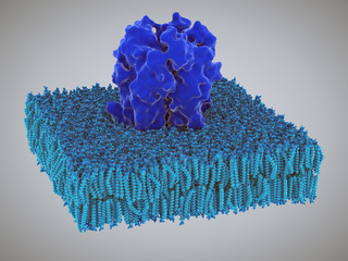 Acetylcholine receptors in the lipid layer of cell membrane