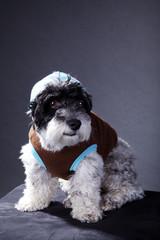 Ghetto Hund der rockt, hoch