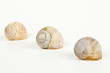 three empty snail shells