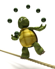 Tortoise juggling on a tight rope