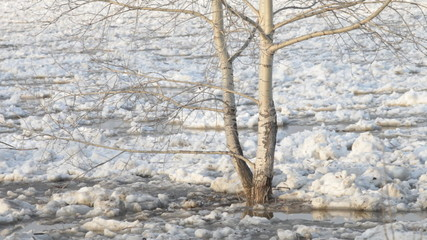 Chunks of ice flow down the river