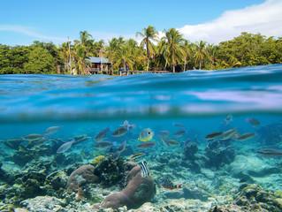 Snorkeling in Panama