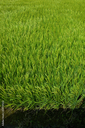 farm[paddy_field]_43