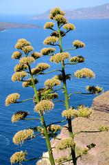 Blick auf die Caldera - Santorin - Griechenland