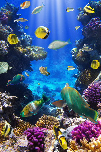 Foto op Aluminium Onder water Coral colony and coral fish