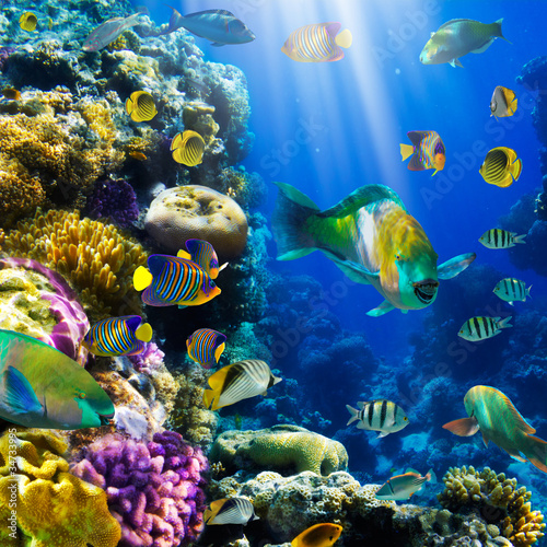 Koralowa kolonia i koralowa ryba