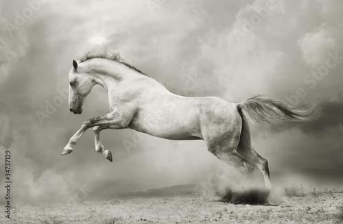 silver-white stallion on black © Mari_art