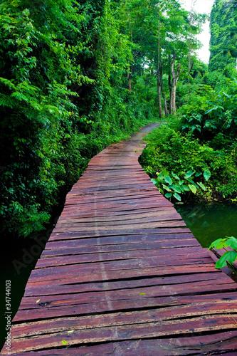 linowy-przejscie-przez-treetops-w-lesie-tropikalnym