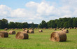 Bales of hay in field