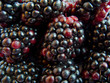 Macro image of blackberry