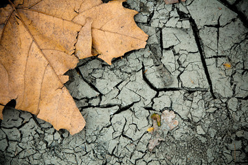 Fallen leaf and cracked ground