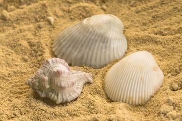 Caracoles y conchas  en fondo de arena
