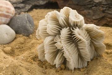 coral corales en fondo de arena