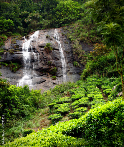 Tea field & waterfall in munnar kerala, India