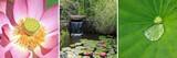 Fototapety tryptique sur bassin aquatique de jardin zen