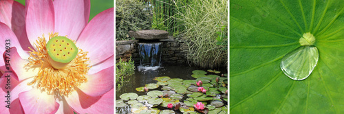 Tryptique sur bassin aquatique de jardin zen by jo l behr royalty free stock - Jardin zen avec bassin ...