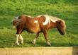 Schönes Pony