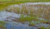 Closeup of a Dutch wetland poster