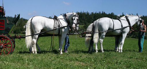 horses team