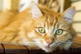 gato acechando poster