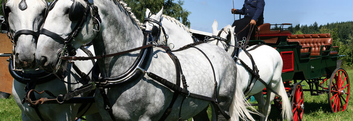 horses team panorama