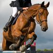 Fototapeten,springen,pferd,wettbewerbsfähigkeit,hemmnis