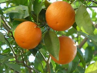 Üç portakal