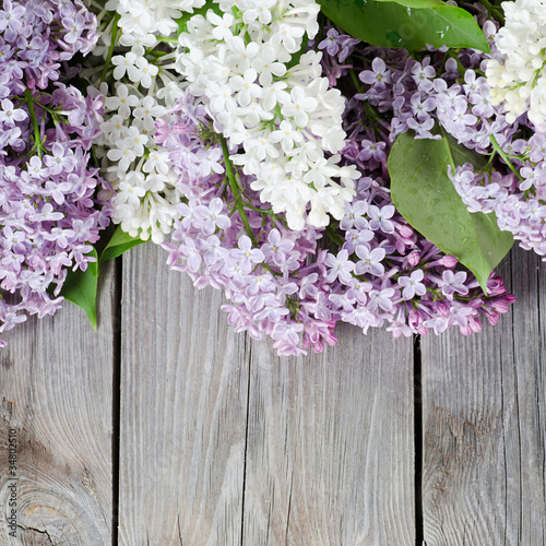 Foto op Canvas Lilac Beautiful lilac