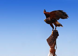 Bird taming