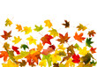 Falling colorful autumn maple leaves background.