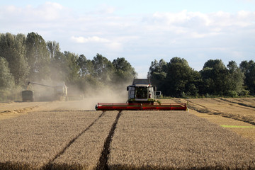 Combine harverster at work in wheat field