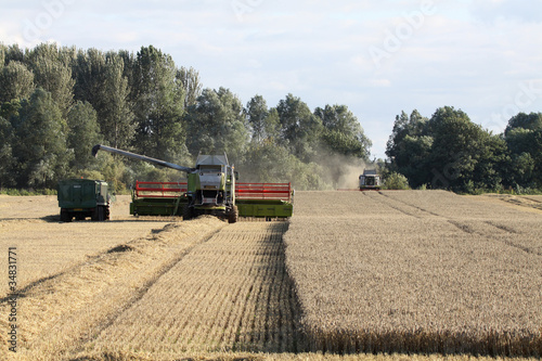 Combine harvesters at work in wheat field