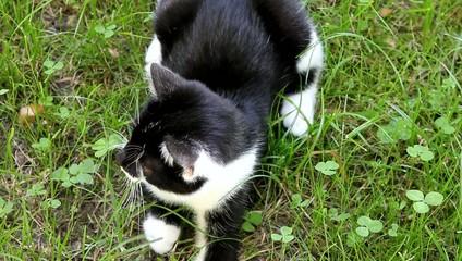 Katze in Wiese