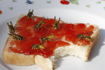 Wespen auf Toast