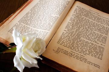 Buch mit weißer Rose