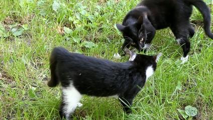 Katzen beim Spielen