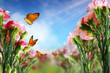 Beautiful Carnation flowers and butterflies in sun ray spring