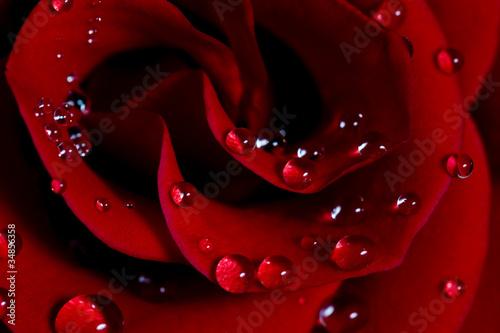 roza-z-kroplami-wody