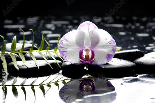 Beautiful white orchid with green fern reflection