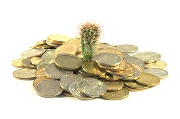 Money and cactus