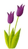 Fototapety Two purple tulips