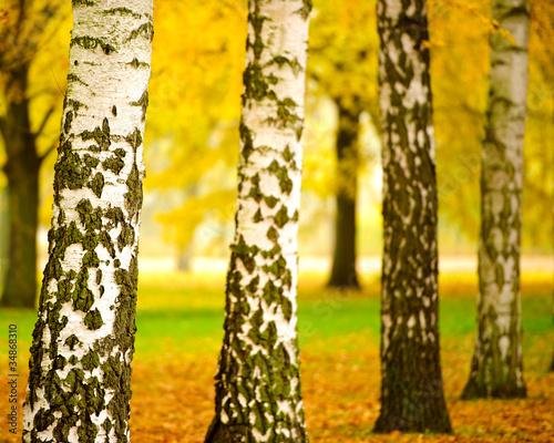 Fototapeten,herbst,wald,natur,landschaft