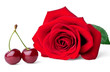 Two sweet cherries and rose isolated on white