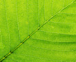 Leaf of a plant closeup. Macro.