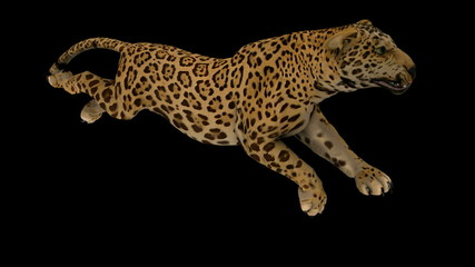 hoto-realistic Looping Jaguar Animation. Alpha Matte. 3d Render