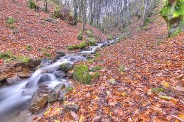 Hojas secas del otoño.