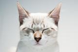 gato zen poster